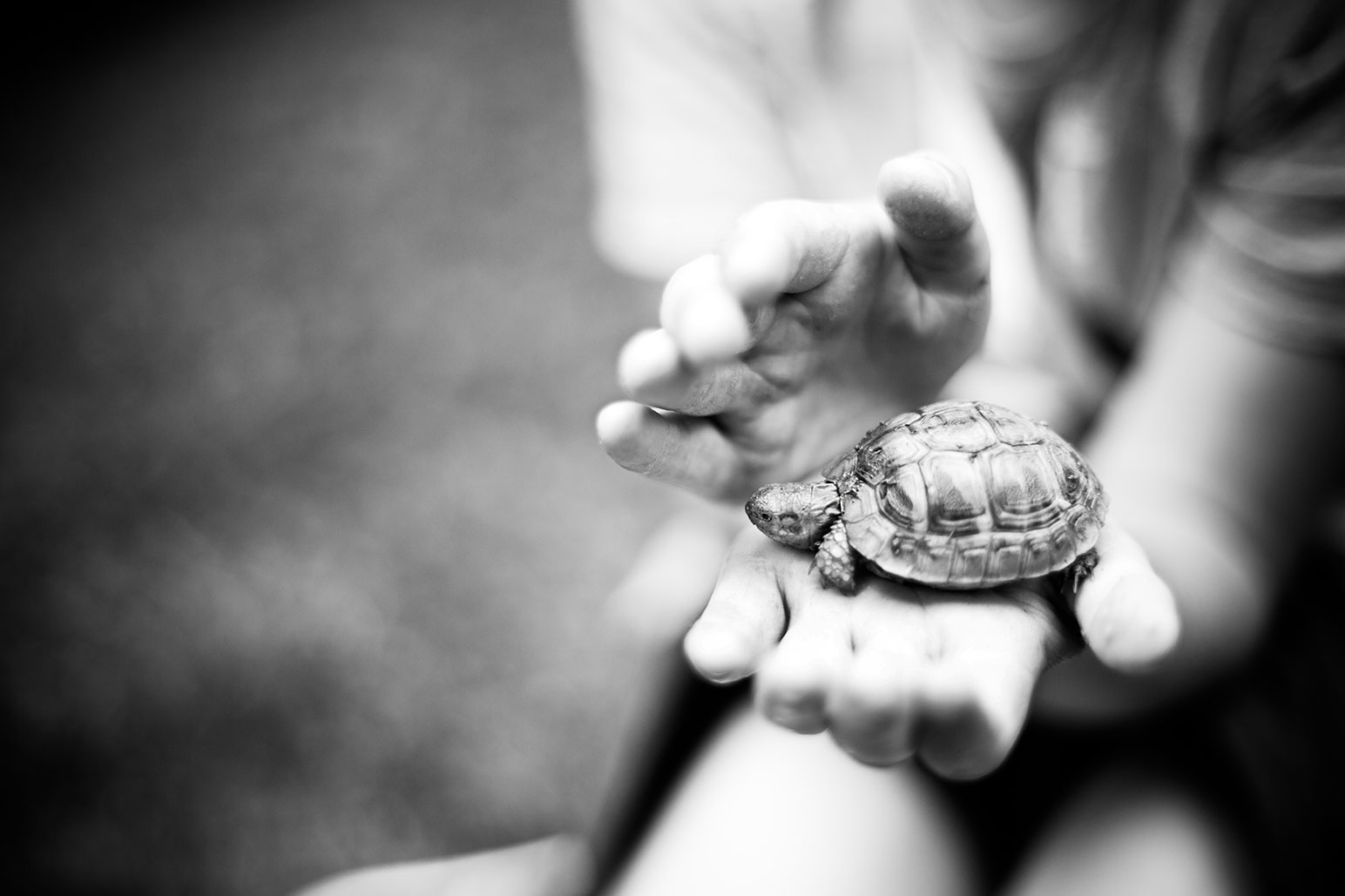 tortue-1